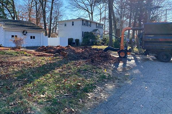 Spring Yard Clean Ups