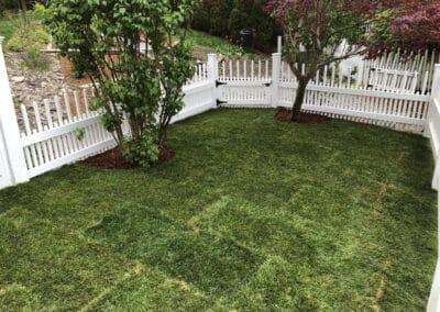 New Lawn Install – 5 Sigourney St