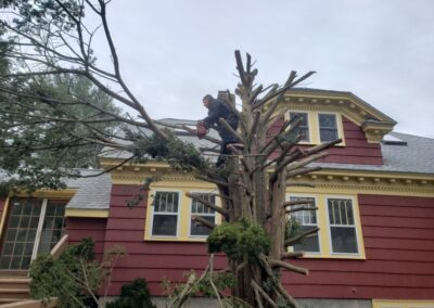 Landscaping & Tree Removal 12 Woodbrier Rd